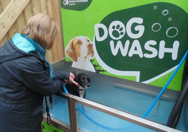 A lady washes a black dog in an automatic dog wash