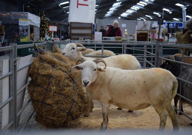 The Cornish Winter Fair, What's on, Cornwall, November 2018
