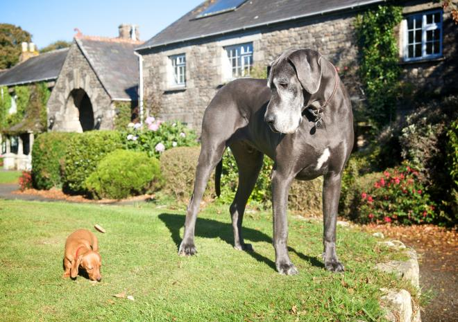 Pets Welcome, Both Little & Large