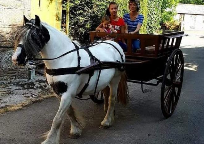 pony and cart rides at chark farm in cornwall