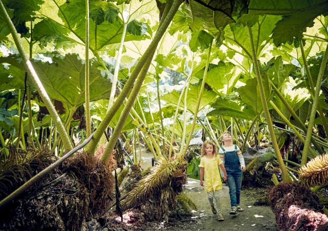 Children walking through Gunnera Passage at Trebah Garden
