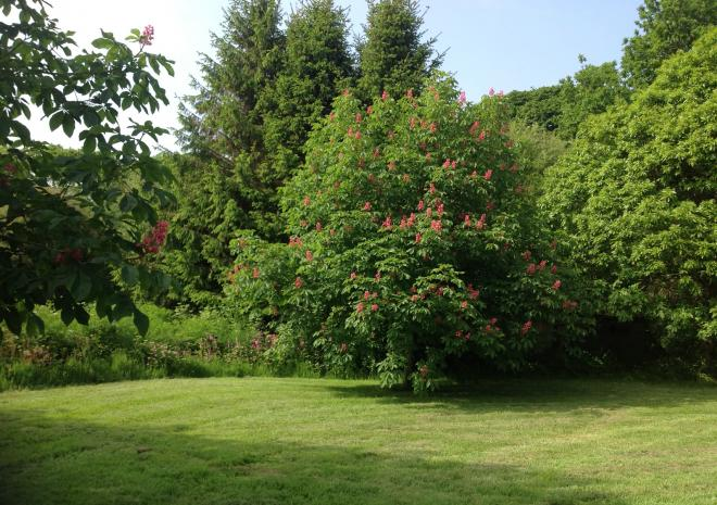 The Chestnut trees in flower. No conkers yet!