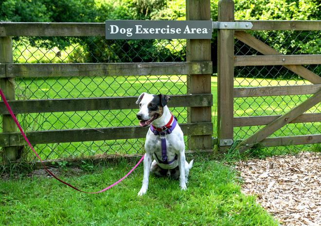 Dog Exercise Area - Old Lanwarnick