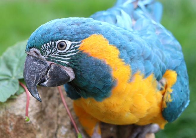 Macaw Paradise Park Hayle Cornwall