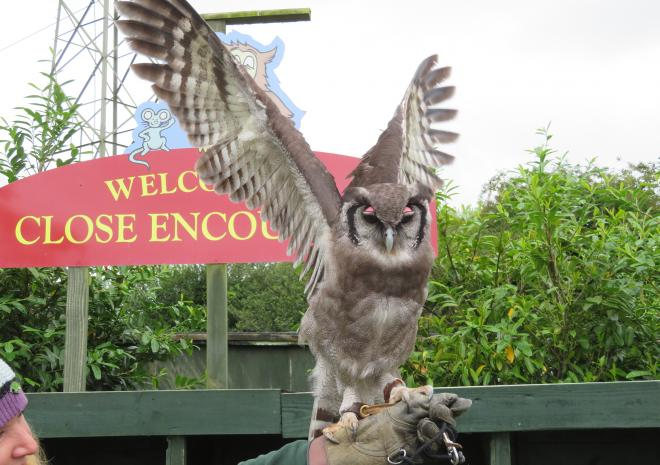Screech Owl Sanctuary-Visit Cornwall-M.Camp