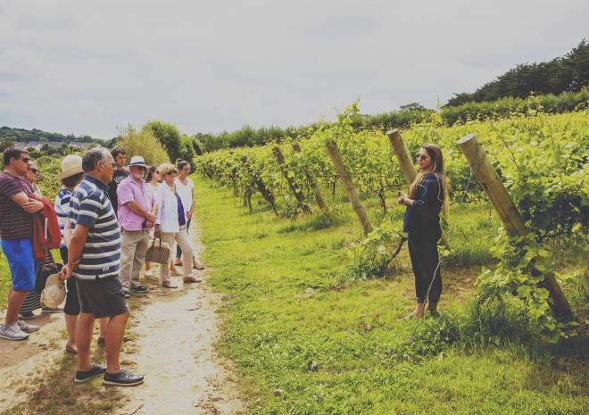 Vineyard tour