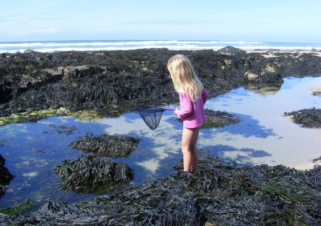 Plenty of rockpools to explore