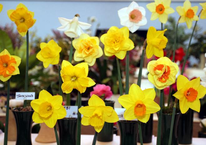 West Cornwall Spring Show, Visit Cornwall 2019