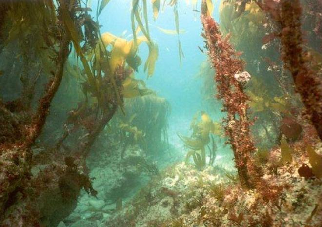 Things to do in Cornwall   Kennack Diving   Helston   Cornwall