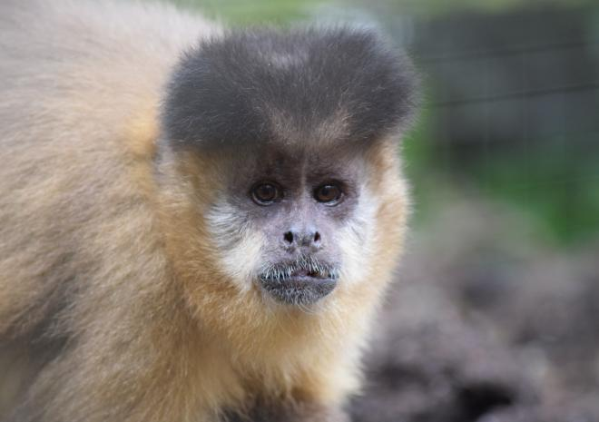 Things to do in Cornwall | Wild Futures Monkey Sanctuary | Looe | Cornwall