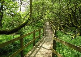 The riverside walks - The Arthurian Centre | Slaughterbridge | Camelford | Cornwall