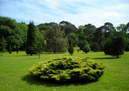 Pinetum Park and Pine Lodge Gardens, St Austell, Cornwall
