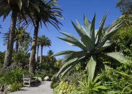 Gardens in Cornwall | Tresco Abbey Gardens | Isles of Scilly
