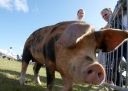 Royal Cornwall Show, What's on Cornwall