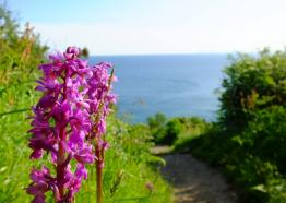 Orchids at Pencarrow Head