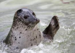 Cornish Seal Sanctuary, Cornwall