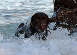 Roselands caravan park dog Cody going for a swim