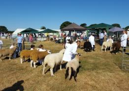 Launceston Agricultural Show | Visit Cornwall
