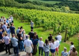 Camel Valley Vineyard, Bodmin, Cornwall
