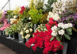 Cornwall Spring Flower Show,  Visit Cornwall, What's On 2019