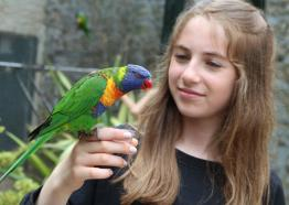 Feeding the Lorikeets  Paradise Park and JungleBarn, Things to do,  Hayle,  St Ives, Cornwall