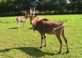 Things to do Cornwall | Wildlife Park Cornwall | Porfell Wildlife Park | Nr Lanreath | Cornwall
