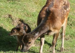 Newquay Zoo, What's On, Visit Cornwall