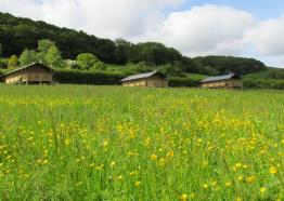Western Meadows Glamping , Glamping, Accommodation, Cornwall