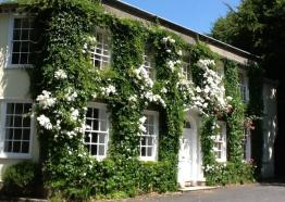 Front of Rose in Vale Country House Hotel in bloom