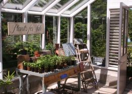 Gardens in Cornwall | Potager Garden and Cafe | Constantine | Falmouth | Cornwall