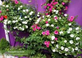 Commercial Hotel St Just Cornwall - Garden Tour