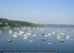 Puffins (Falmouth) | The Scenic Tour