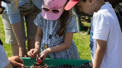 Potting up event, St Michael's Mount garden, Cornwall, May half term