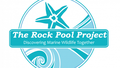Rock Pool Project